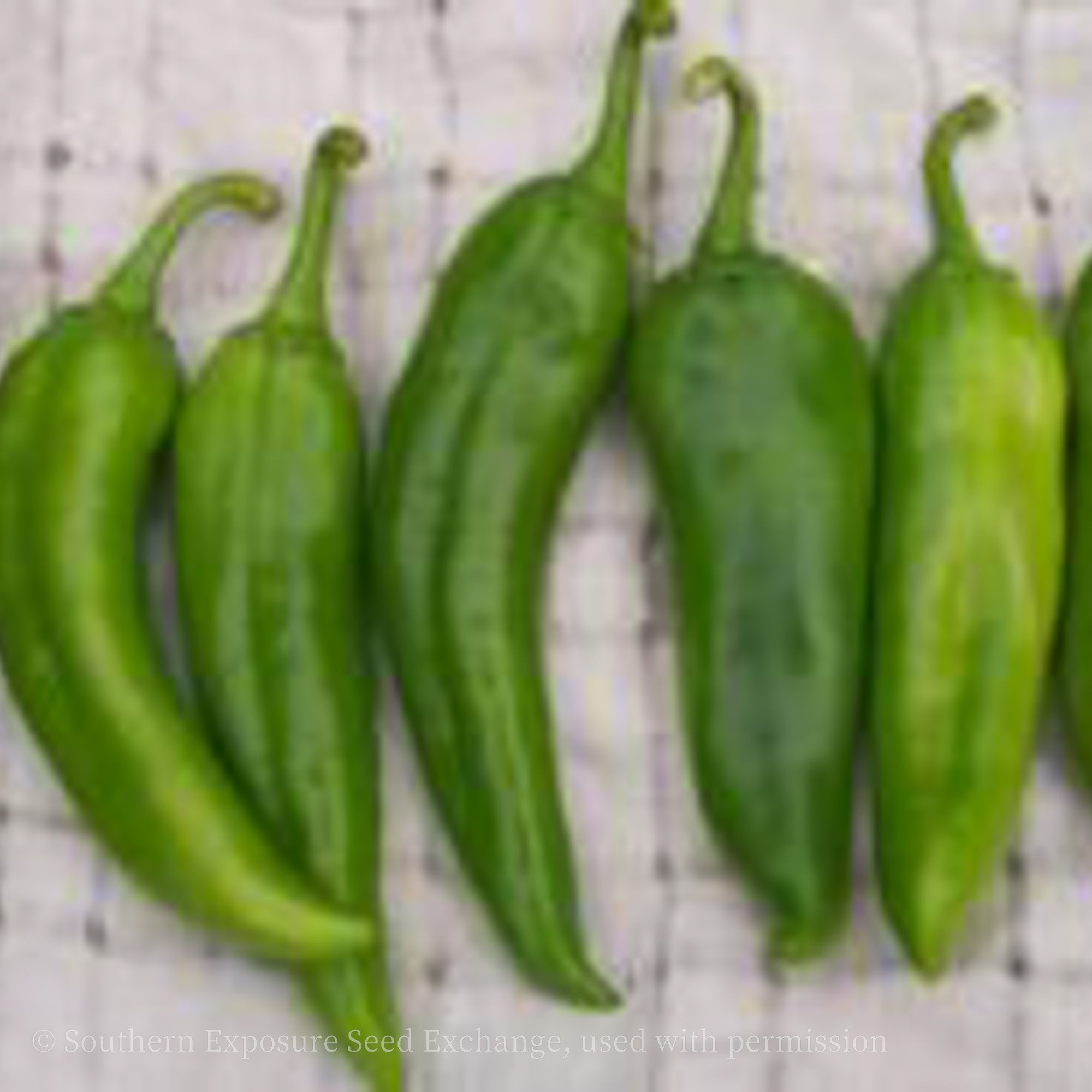 Anaheim Chile Pepper