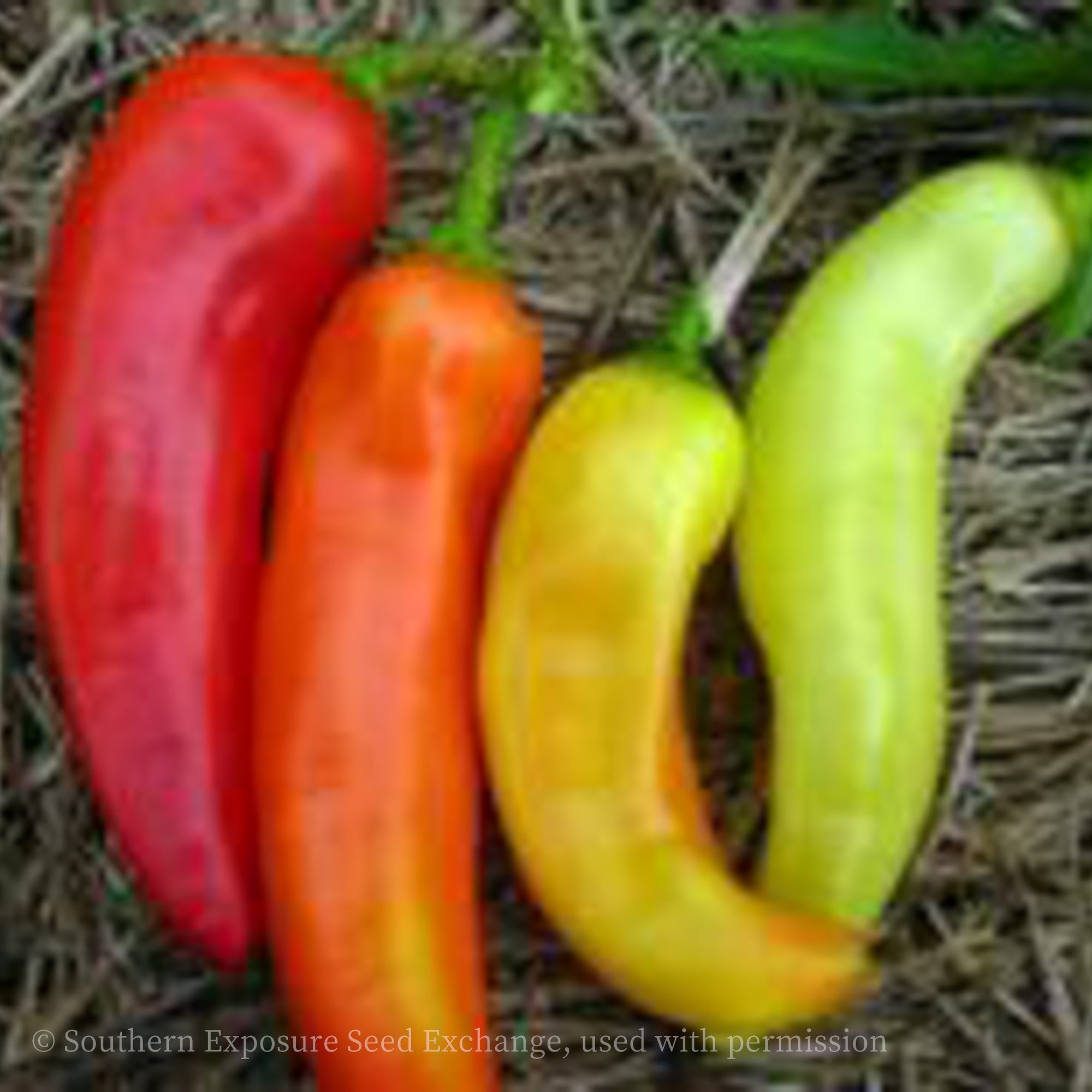 Sweet Banana Pepper (Long Sweet Hungarian)