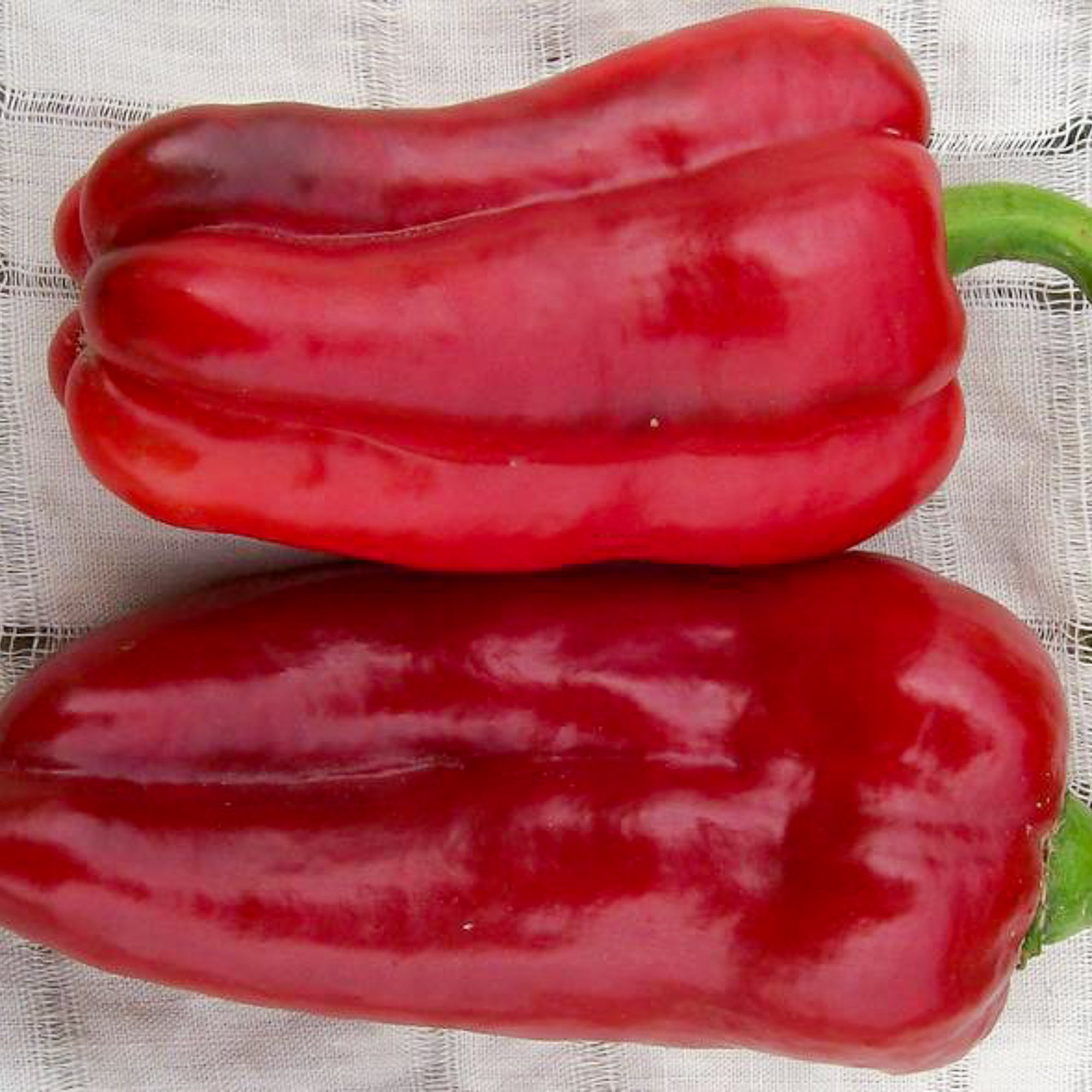 Marconi Sweet Bell Pepper