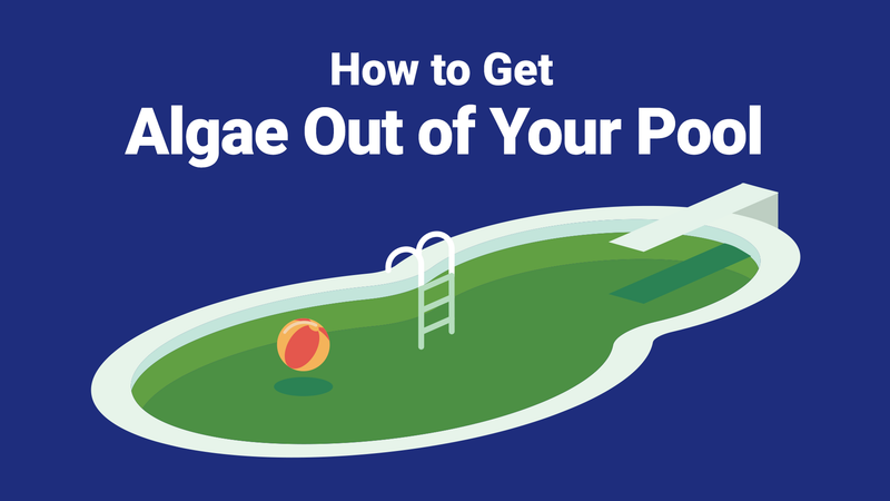 How to Get Algae Out of Your Pool—The Right Way