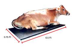COW Mats for Dairy Cows (6.5ft x 3.75ft x 22 mm)