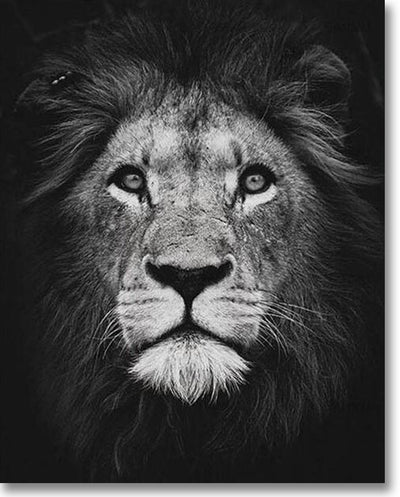 Black And White Lion - Paint By Numbers