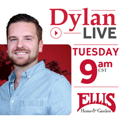Designs by Dylan Live Videos Tuesday 9am