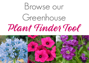 Browse Ellis Home and Garden's Plant Finder Tool to see all of the Greenhouse Plants that we carry year round.