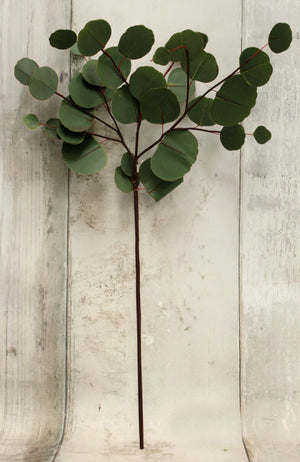 "26"" Silver Dollar Eucalyptus Floral Spray-Floral Stems-Ellis Home & Garden"