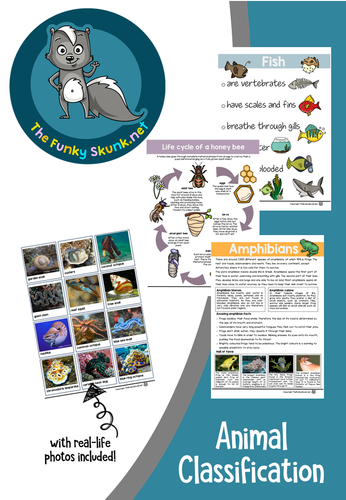 Science - Animal Classifications