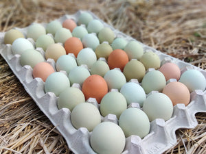 Eggs (a tray of 45 fresh eggs), includes shipping