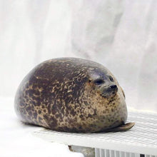 Load image into Gallery viewer, Chubbs™️ The Cuddly Seal