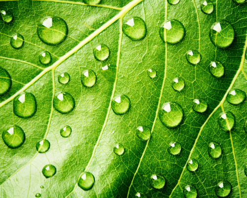 Close up of leaf with droplets of water