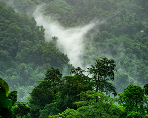 Tropical forest in the mist