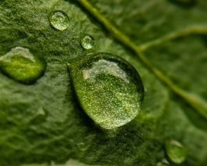 Close up of leaf with water droplets