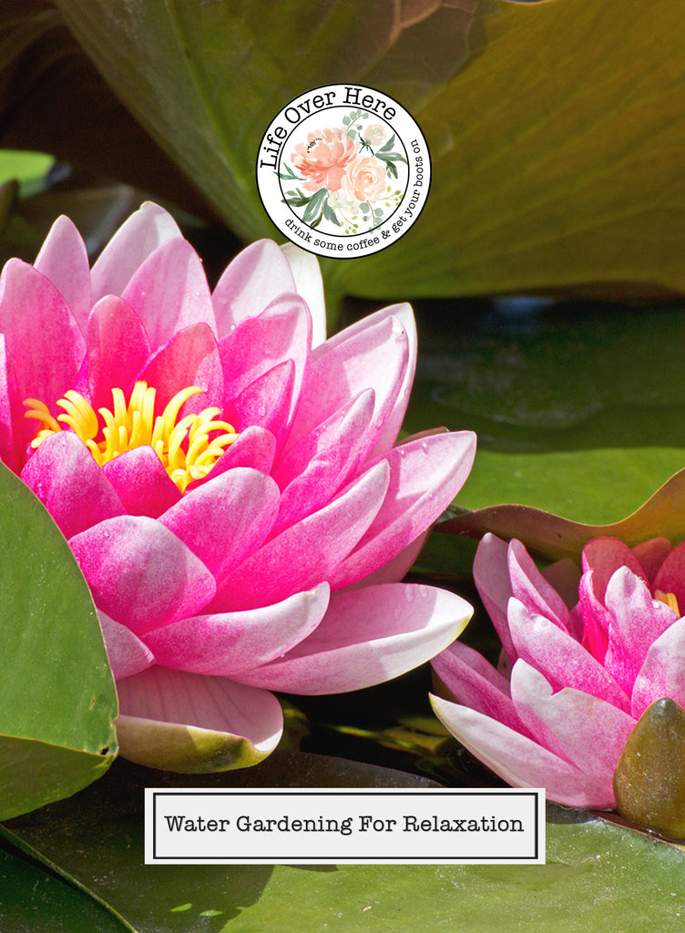 Pink Water Lilies: Water Gardening for Relaxation