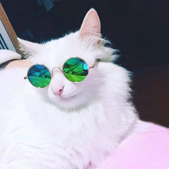 Cool Stylish & Funny Cute Pet Sunglasses