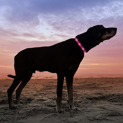 Safe LED Dog Necklace Collar - USB Rechargeable Loop