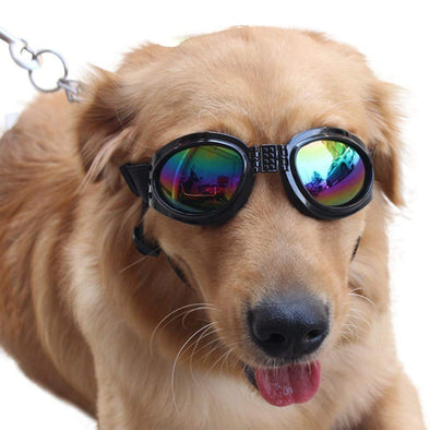 Highest-Rated Dog Sunglasses & Goggles
