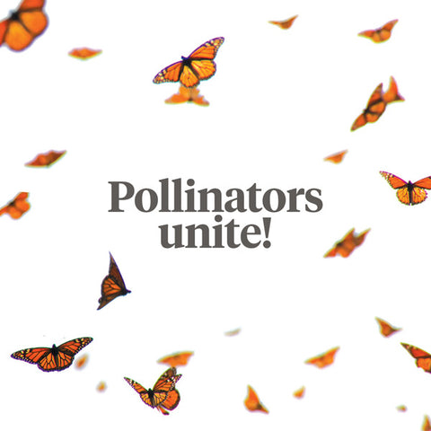 products/0412_pollinators_web_1.jpg