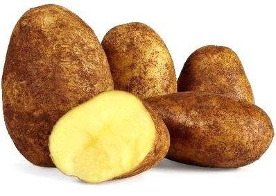 Potatoes - Dutch Cream