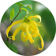 Load image into Gallery viewer, Ylang Complete Essential Oil