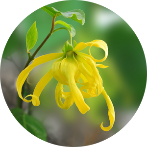 Ylang Complete Essential Oil