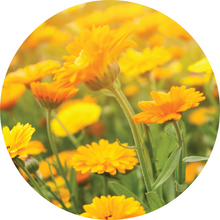 Load image into Gallery viewer, Calendula Essential Oil