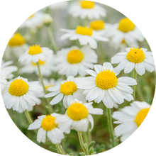Load image into Gallery viewer, Chamomile Essential Oil
