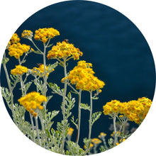 Load image into Gallery viewer, Immortelle Essential Oil