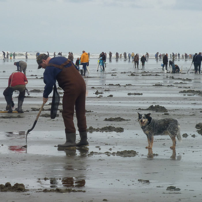 Razor Clam Dig Cancelled Dec 1 - 4, 2020
