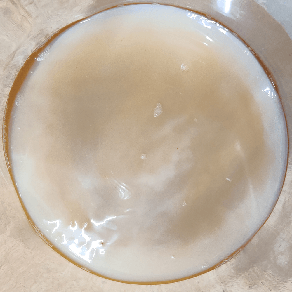Scoby For Kombucha