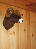 Cliff - Large Bighorn Sheep - Fairgame Wildlife