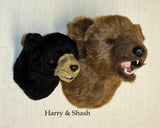 Harry - Small Black Bear - Fairgame Wildlife