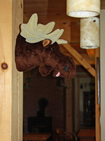 Maynard - Small Moose - Fairgame Wildlife