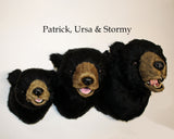 Patrick - Medium Black Bear