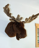 Weston - Largest Moose