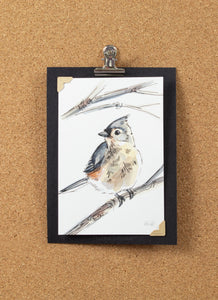5/30 Tufted Titmouse