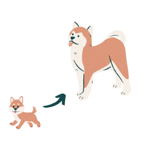 Illustration of a puppy growing up into an adult dog
