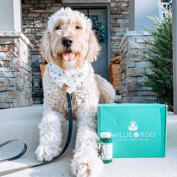 Labradoodle laying on the front porch with an unopened Willie & Roo box and an unopened Balanced supplement bottle