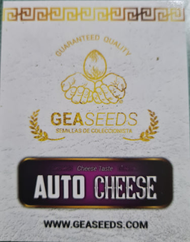 Cheese Gea Seeds Auto