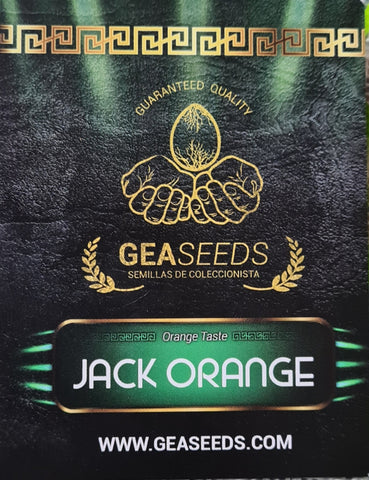 JACK ORANGE FEM GEA SEEDS