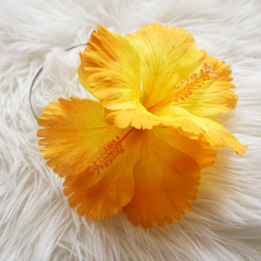 Hibiscus jaune/orange