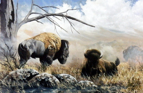 Ray Whitson Buffalo