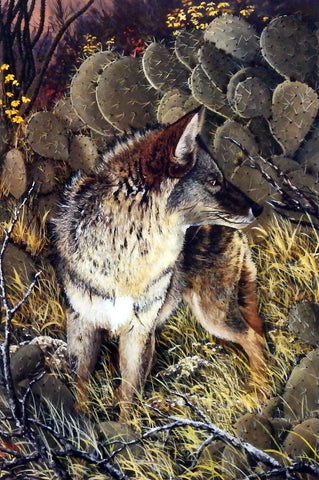 Ray Whitson Coyote
