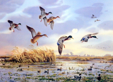 James Killen Fish Pond Mallards