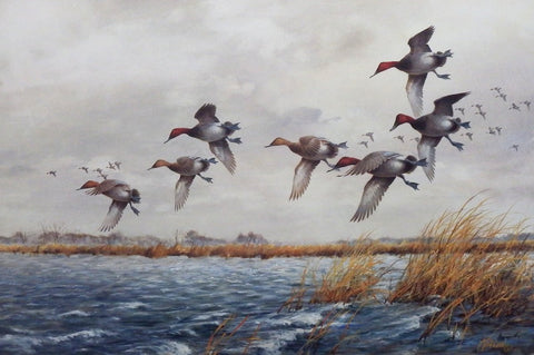 James Killen Wind Swept Canvasback