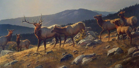 Nancy Glazier High Country Elk