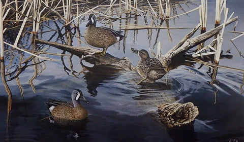 Ron Van Gilder Spring Song-Blue Wing Teal