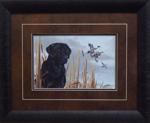 Scot Storm Field Companion Black Lab-Framed