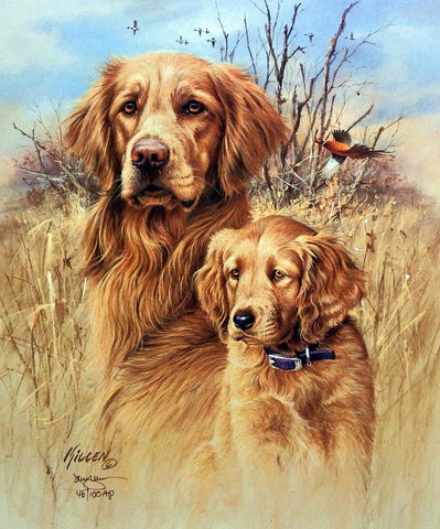 James Killen The Legacy-Golden Retriever