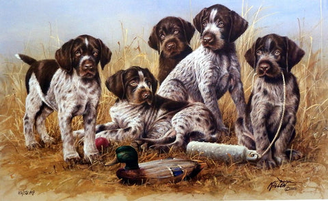 James Killen Great Hunting Puppies-Drahthaars