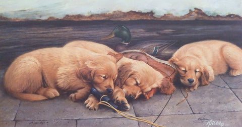 James Killen Golden Dream Golden Retriever