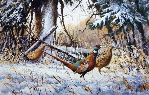 James Killen First Snow Pheasant Print AP